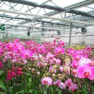Mái che bằng tấm lợp nhựa lấy sáng polycarbonate cho nhà trồng hoa lan